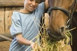 Good Natural Sources of Protein for Horses