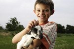 The Age to Wean Bottle-Fed Kid Goats
