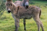 How to Care for a Baby Donkey