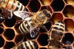On Average How Long Does a Queen Bee Live?