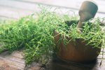 Horsetail Herb for Cats & Dogs