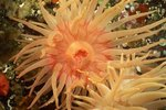 Features of the Venus Flytrap Sea Anemone