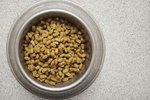 Cat Food Allergy Symptoms
