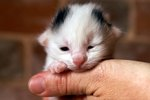 How to Take Care of Newborn Kittens & a Mother Cat