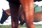 What Are the Callous Like Things on a Horse's Legs?