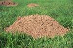 What Do Ground Moles Eat?