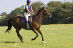 Exercises to Teach a Horse to Canter on a Right Lead