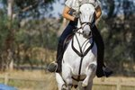 Trotting Vs. Cantering in Horses