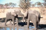 How Do Elephants Get Water During the Dry Season?