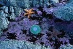 Difference Between Echinoderms & Molluscs