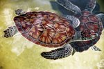 What Species of Turtles Do Well Together?