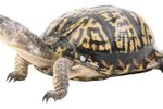 How Long Do Turtles in Captivity Live?