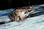 Frogs That Live in Warm Weather and Cold Weather