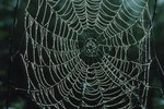Facts About Orb Weaver Spiders