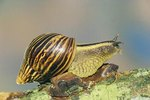 Sleeping Habits of Snails