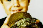 Why Do Turtles Eat Pebbles?