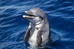 What Are the Traits of a Dolphin?