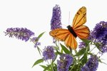 How Do Butterflies Hear, Smell & Feel Objects?
