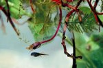 Interesting Facts About Tadpoles