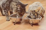 When Do Kittens Start Eating Solids?