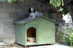 How to Keep a Dog House Cool in Summer