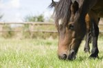 What Is the Difference Between Grain & Pellets for Horses?