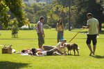 Dog Park Fundraising Ideas