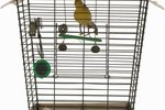 What Is the Best Way for Your Canary to Get to Know You?