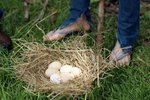 Chicken Nesting Box Ideas