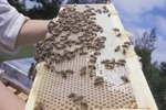How to Bear-Proof a Beehive