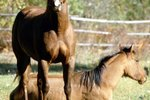 How Do Horses Show Affection to One Another?