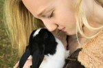 Good Information About Dutch Rabbits