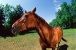 Home Remedies for Fly Control on Horses