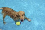 The Effects of a Chlorine Pool on Dogs