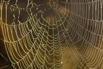 How Do Spiders Reproduce: by Live Birth or by Eggs?