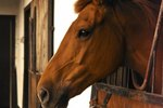 Can a Horse Get Sick From Drinking Stagnant Water?