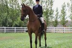 How to Train a Horse for Dressage
