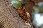Different Species of Squirrel Living in the US