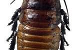 What Bugs Are Related to the Cockroach?