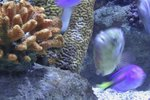 Ways to Eliminate Ammonia in a Saltwater Aquarium