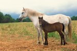 What Time of Year Do Horses Usually Foal?