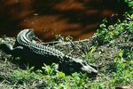 Rare Animals in the Everglades in Florida