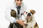 Medrol Side Effects in Dogs