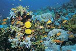 Fast Facts About Sea Animals
