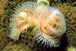 Interesting Facts on Christmas Tree Worms