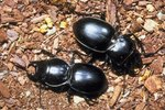 Facts About the Beetles That Live in the Tundra