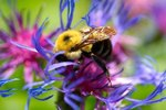 Differences Between Bees' Nests & Hives