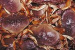 Types of Crabs Found at the Ocean
