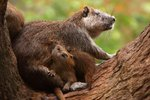 Fun Facts About Baby Beavers