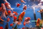 How Does an Aquarium Float Switch Work?